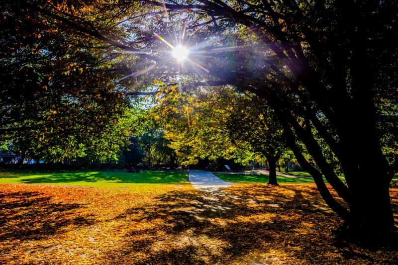 Herbst am jüdischen Friedhof in Altona